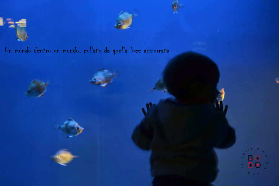 acquario di Genova, bimbo che osserva i pescia