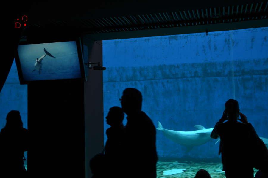 acquario di Genova, squai