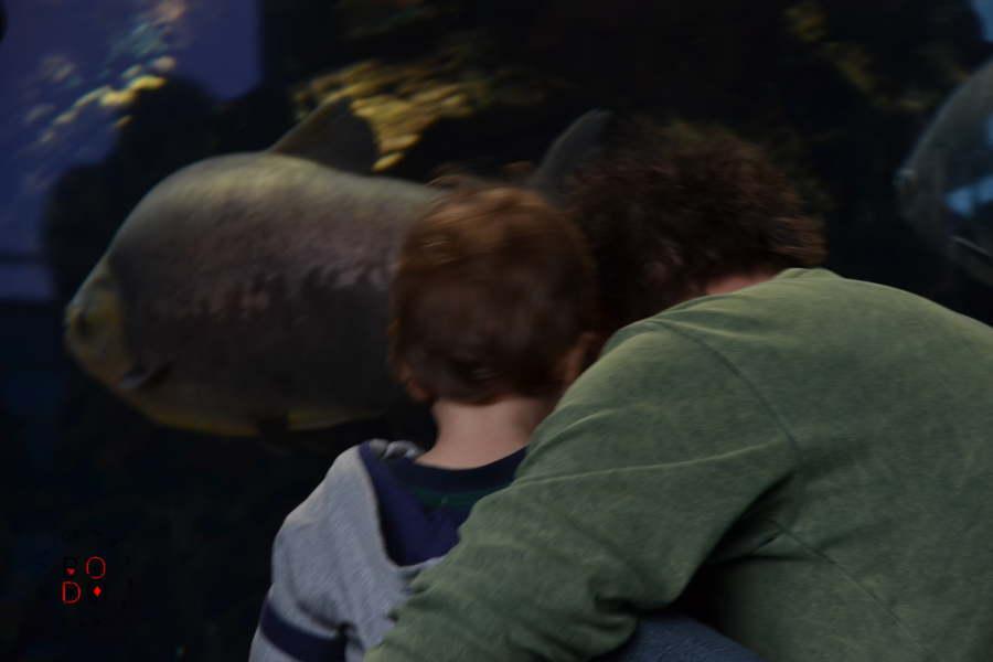 acquario di genova, bimbo col papà