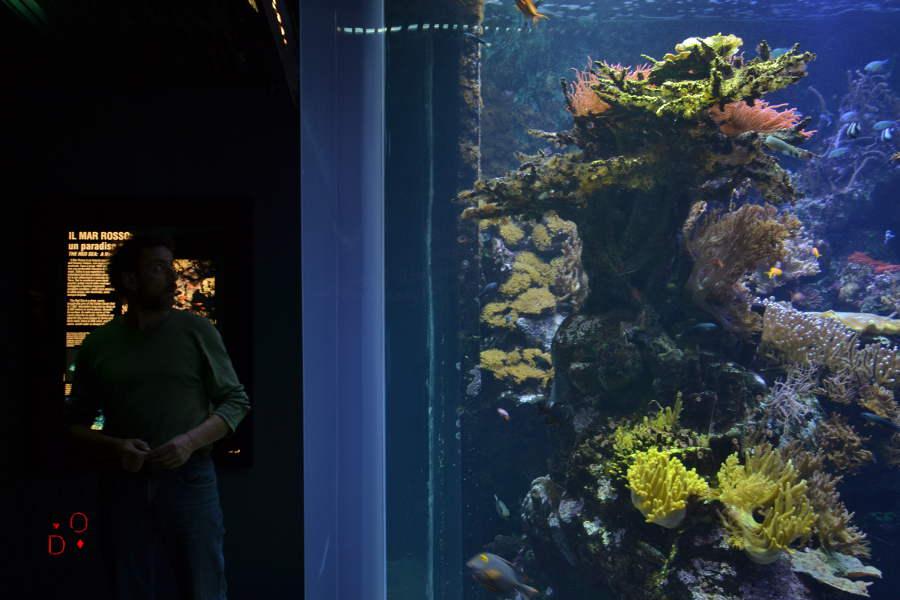 acquario di Genova, vasche