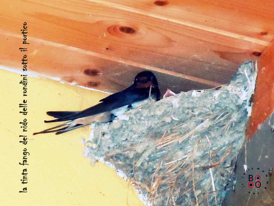 rondine nel nido