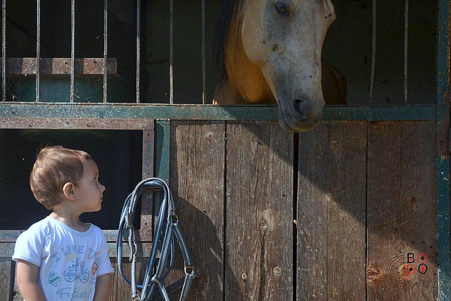 bimbo e cavallo