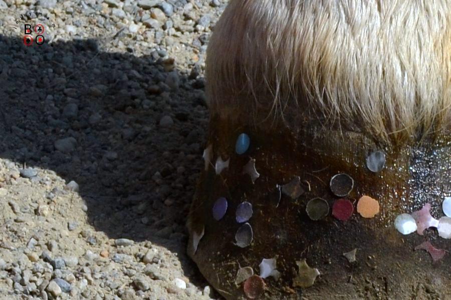 zoccolo di cavallo