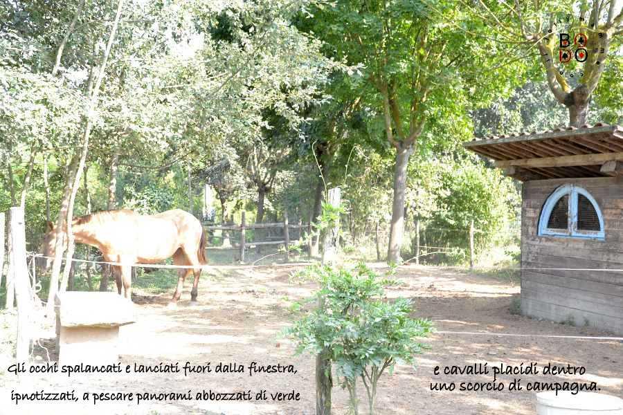 cavalli in campagna