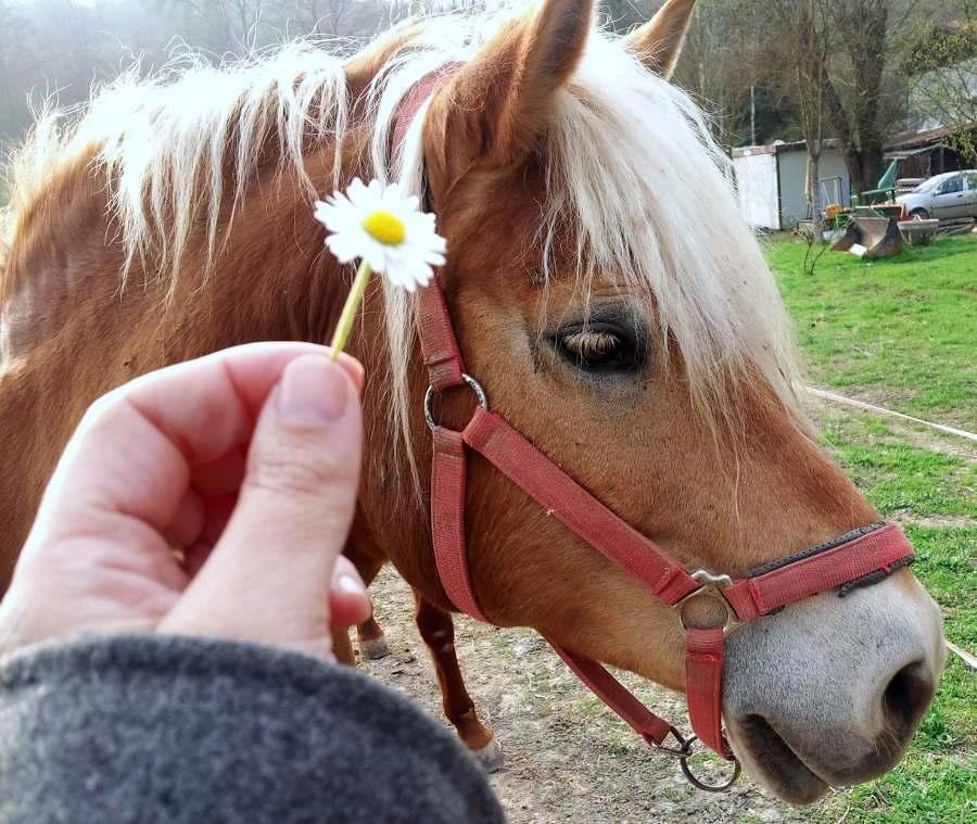 cavalli_chiarlie