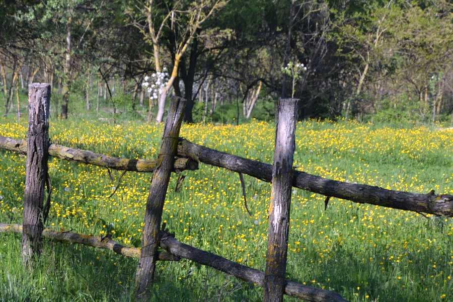 primavera in campagna