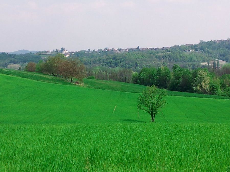 colline del Basso Monferrato