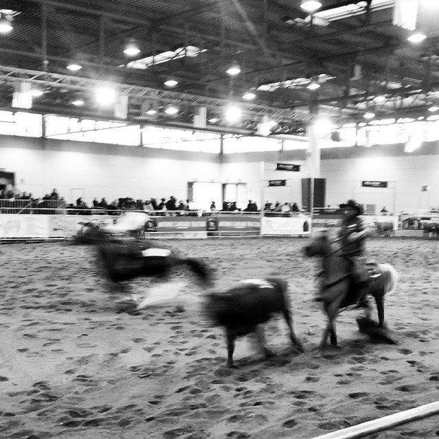 feira dei cavalli verona