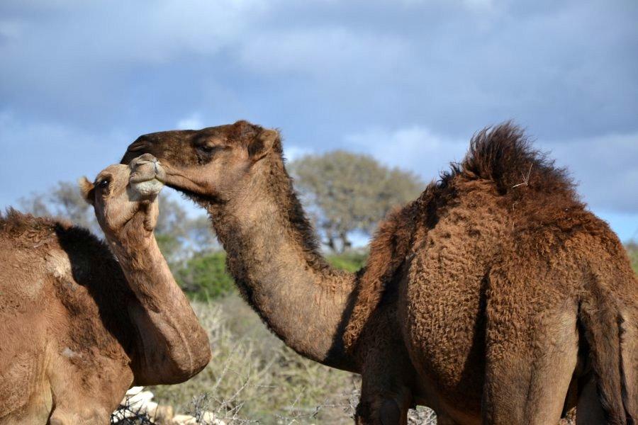 dintorni di essaouira, marocco