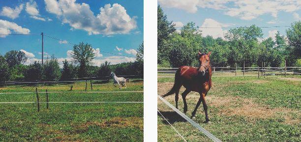 cavalli, pom granin
