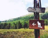 Estoul, Il richiamo della foresta