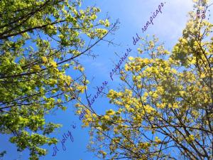 rami e foglie